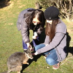 Feeding Kangaroos with Linda
